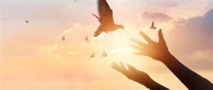 manos abiertas dejando volar en libertad a una paloma. En el fondo cielo durante el amanecer